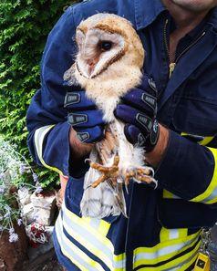 Bild: Feuerwehr Menden