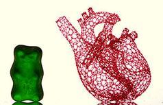 Gerüst: Formgebung bei biologischer Züchtung relevant.
