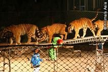 Bild: AAF Animals Asia Foundation e.V.