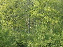 Blick in einen Eichen-Mischwald Bild: FreddyKrueger / de.wikipedia.org