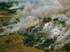 Bild: Mark Edwards / WWF-Canon