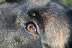 Hund: Tiere beobachten Menschen ganz genau.