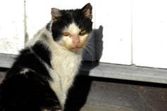 Streunerkatzen leiden an Hunger und unbehandelten Krankheiten. Bild: VIER PFOTEN