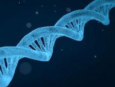 DNA: Genkombinationen entscheiden über Ehe.