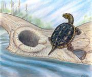 Die Süßwasserschildkröte der Gattung Boremys sitzt auf einem Schädel des Dinosauriers Triceratops nach dem Meteoriteneinschlag. Illustration: Brian Roach