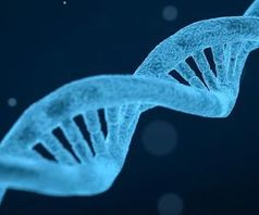 DNA-Doppelhelix: 3D-Struktur begünstigt Distrophie.