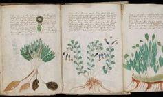 Voynich-Manuskript: Schriftstück im Bestand der Yale University. Bild: yale.edu
