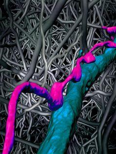 Das dichte neuronale Netzwerk der medialen entorhinalen Hirnrinde (neuronale Verästelung in grau) und das überraschend präzise Muster von Synapsen, die in diesem Gehirnteil (in Farbe) gefunden wurde. Bild: Max-Planck-Institut für Hirnforschung (idw)