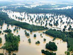 Hochwasser - hier an der Elbe 2002. Bild: Bernd Lammel / WWF