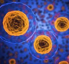 Zellen: leben deutlich länger in schwerem Wasser.