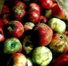 Eine Menge Äpfel: auch in den Medien . Bild: pixelio.de, Felix Rühling