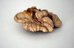 Walnuss: Gehirn inspiriert mit seinem Gefäßsystem. Bild: pixelio.de/C. Enzmann
