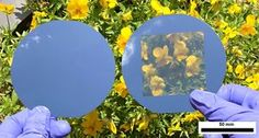 Normale versus transparent gestanzte Silizium-Solarzelle.
