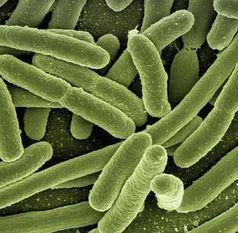 Bakterien: Forscher klären Eisentransport.