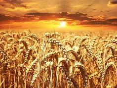 Bild: pixabay.com, Pezibear