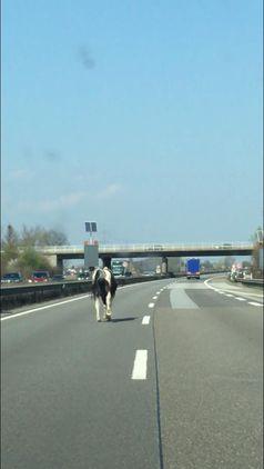 entlaufenes Pferd