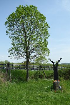 Gedenkstätte für Silke Bischoff an der Autobahn A3 bei Aegidienberg: Neben der Linde steht die von dem Bildhauer Franz Hämmerle aus Windach gestaltete Stele.