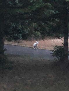 Die Einsatzkräfte trauten kaum ihren Augen, als sie das weiße Känguruh im Hefel entdeckten. Bild: Feuerwehr Velbert