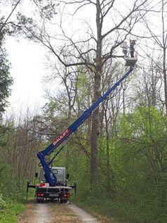 In Höhen von bis zu 20 Metern entnimmt Anna Eisen von einer mobilen Arbeitsbühne aus Proben im Neuburger Auwald. Quelle: Anna Eisen/upd (idw)