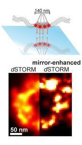 Kernporenkomplex (oben) sowie dSTORM-Bilder.