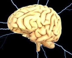 Gehirn: Fake News verbessern das Gedächtnis.