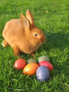 Ostereier und Osterhase: Alles muß ge(kenn)zeichnet, kontrolliert und notfalls bestraft werden! :)
