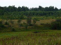 Verwaldung stillgelegter landwirtschaftlicher Flächen auf dem Gebiet der ehemaligen Sowjetunion Quelle: Foto: Alexander V. Prishchepov (IAMO) (idw)