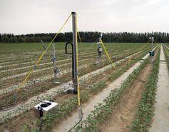 Stickoxid wurde in Messkammern auf der Bodenfläche gemessen und über kleine Lufttrichter in unterschiedlichen Höhen über dem Boden eingesammelt. Quelle: Buhalqem Mamtimin, MPI für Chemie. (idw)