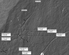 Ausschnitt eines Detailscans der Pferdekopfs von Platte 59. Angegeben sind die Linienbreiten der Gravierungen an ausgewählten Messpunkten des 3D-Scans Quelle: Foto: Alexandra Güth, MONREPOS im Journal of Archaeological Science 39, Seite 3111 (idw)