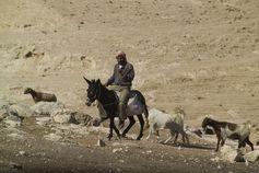 Nomade im Westjordanland, Naher Osten. Quelle: . Foto: André Künzelmann/UFZ (idw)
