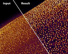Verrauschte Fluoreszenz-Mikroskopie-Aufnahme von Zellkernen des Plattwurmes Schmidtea mediterranea (oben) und nach der Bearbeitung durch CARE (unten) Quelle: © Martin Weigert, Tobias Boothe und Florian Jug/MPI-CBG, CSBD (idw)