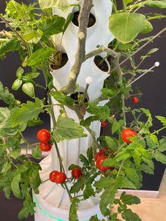 Die Türme bringen stets und im fliegenden Wechsel frisches Gemüse, Salat, Beerenobst, Tomaten und andere gesunde Köstlichkeiten. Man kann die freigewordenen Öffnungen ständig neu besetzen.