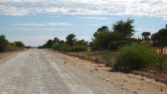 Die Strasse ist aus der Sicht der Erdmännchen eine weite offene Zone, die es potenziellen Raubfeinden erleichtert, ihrer Beute nachzustellen. Quelle: © Simon Townsend / Kalahari Meerkat Project (idw)