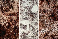 Angefärbtes Kalzium - SNA, 1920, 14.09.2021 (Foto: © Foto : Pouikli / Max-Planck-Institut für Biologie des Alterns, 2021)
