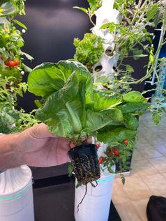 Eine Pflanze in dem korbartigen Topf, mit dem sie in den Halterungen der Türme sitzt.