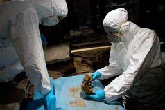 Probeentnahme am Skelett Quelle: Bild: Archäologischer Dienst Graubünden (idw)