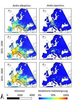 Modellierungen zur Verbreitung der beiden invasiven Mückenarten. Quelle: © Senckenberg (idw)