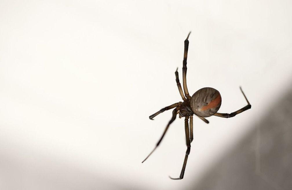 Spinne (Symbolbild)