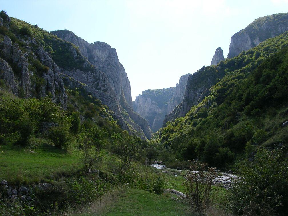 Rumänien Urwald