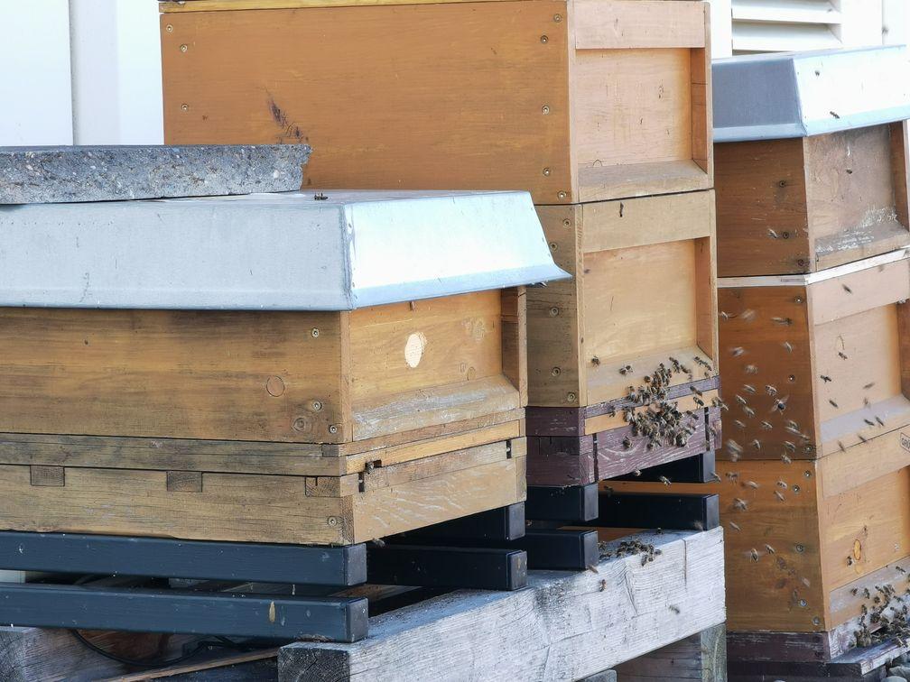 Bienen in einem Bienenstock Bild: Polizei