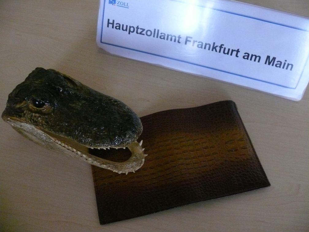 Archivfoto: Krokodilkopf und Geldbörse
