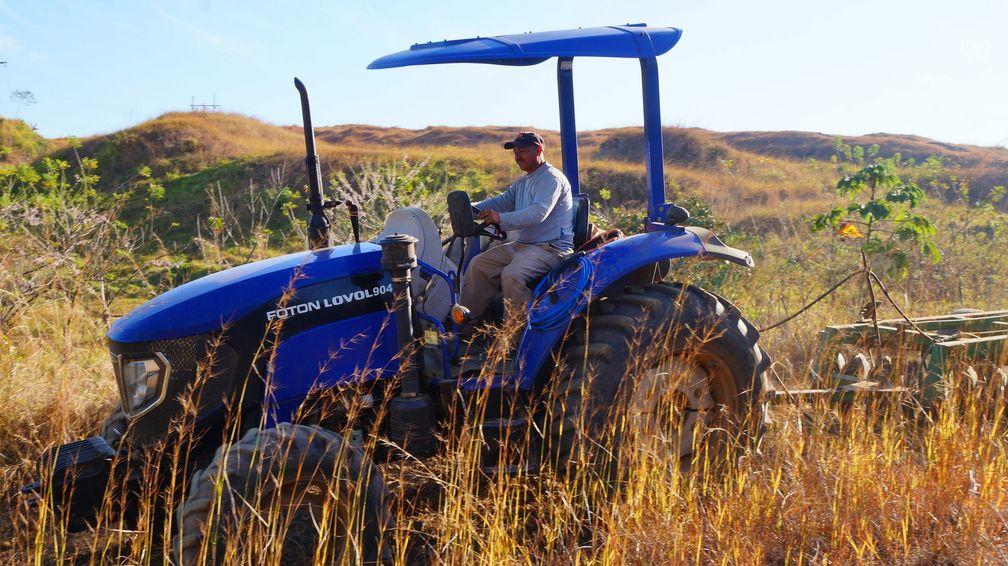 Kautschukplantage Panama Arbeiten. Bild: TIMBERFARM GmbH Fotograf: TIMBERFARM GmbH