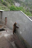 Im Kormisosh-Auswilderungs-gehege in Bulgarien werden auch heute noch Bären gehalten. Quelle: © Aleksandar Dutsov, Balkani Wildlife Society. (idw)