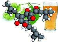Forschern gelang jetzt die Strukturaufklärung der Hopfenbitterstoffe im Bier. Quelle: (c) Wiley-VCH (idw)