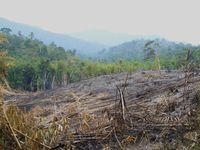 Durch Rodung zerstörter Regenwald auf Borneo (Malaysia) in der Region des Mount Kinabalu. Quelle: Foto: Karl Eduard Linsenmair (idw)