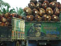 Bild: Desmarita Murni / WWF Indonesien