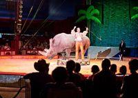 El Salvador führt Wildtierverbot in Zirkussen ein. Bild:  © VIER PFOTEN, Fred Dott