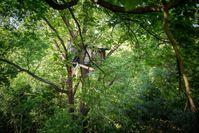 """Ein """"besetzter"""" Baum um den 12.000 Jahre alten Wald vor der Zersörung von Konzernen zu sichern."""