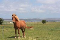 Pferd auf der Weide: Mist als Energieträger. Bild: pixelio.de, Sabine Ullmann
