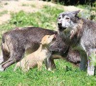 Rudel: Hauptsache Mutter und Kind geht es gut. Bild: pixelio.de, Klaus Jacobs